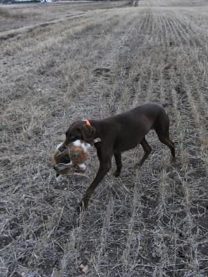 4. O cachorro e a lebre