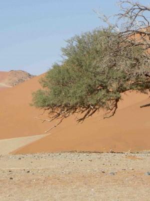 7. O Profeta, o Espírito, o Deserto (Mc 1,1-13)