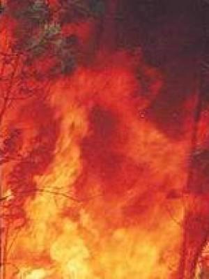 5. O incêndio na floresta