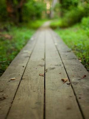 33. Caminhos da pastoral