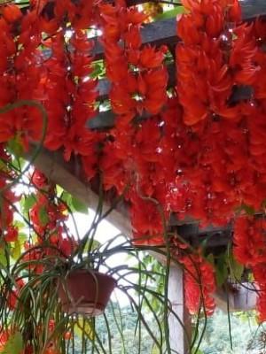 221. Flor de Jade